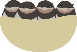 ツバメの巣(ぎゅうぎゅう)