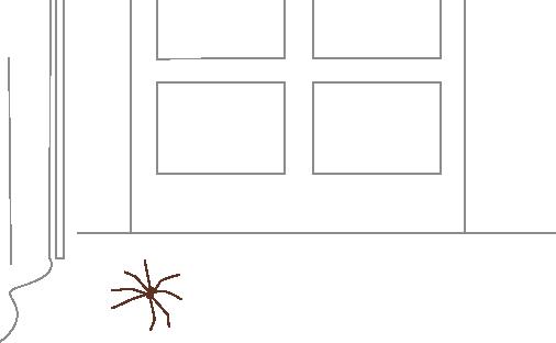玄関に蜘蛛が