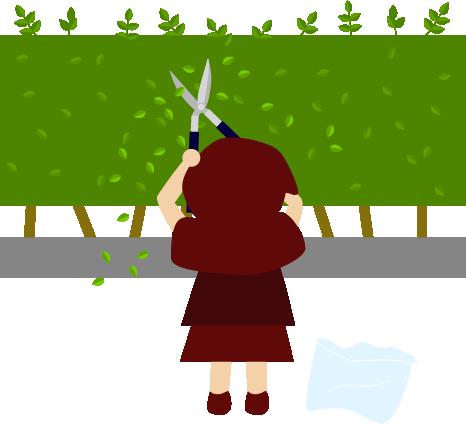生垣を剪定する赤ずきん