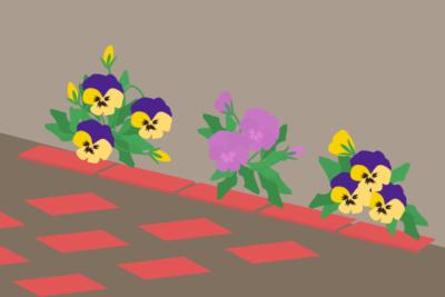 植え込みの花