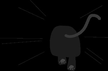 黒猫が走る