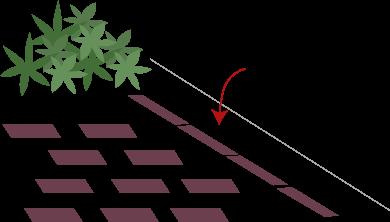 庭の植え込み
