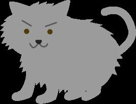グレーのタヌキみたいな猫