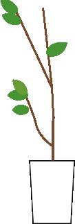 枯れかけの観葉植物