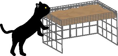 黒猫が近づく
