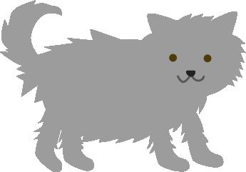 ふさふさの新しい猫