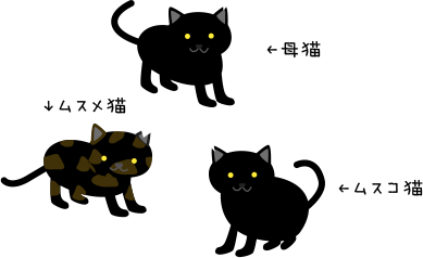 地域猫親子