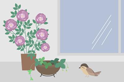 すずめと植物