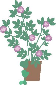 薔薇の花が小ぶり