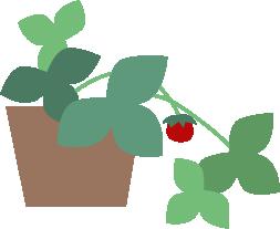 小さい苺の実