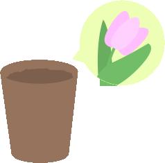 チューリップ芽が出ず