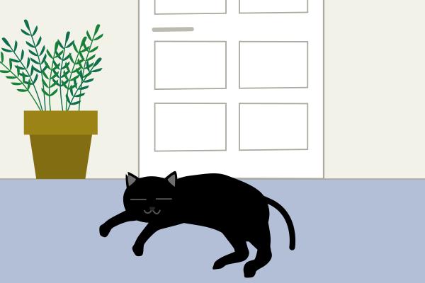 玄関前に黒猫