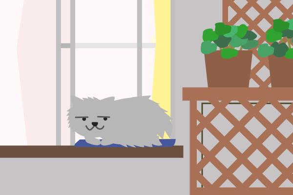 ふさふさの猫