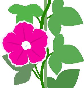 ピンクの朝顔のイラスト