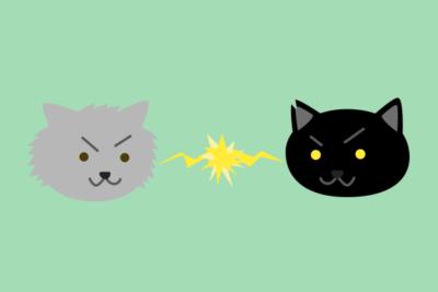 仲が悪い猫